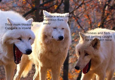 These White Wolves Laughing Memes Are Taking Over (20 Pics)