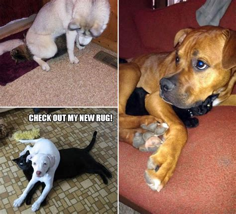 Dogs Being Jerks To Cats - ViraScoop